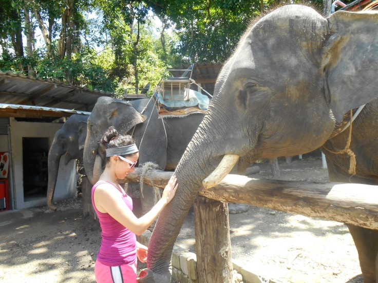 Feeding some elephants in Krabi.